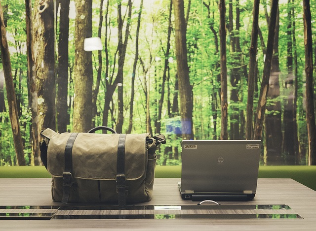 4 Green Office Tips: How To Have The Greenest Office