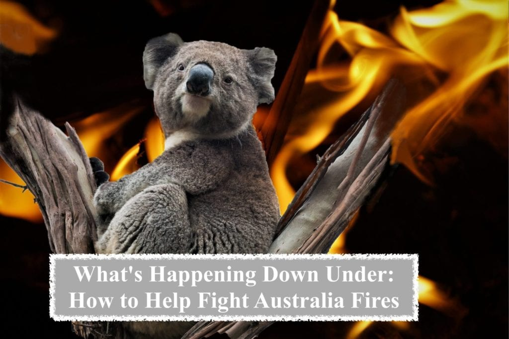How to Help Fight Australia Fires & Rebuild